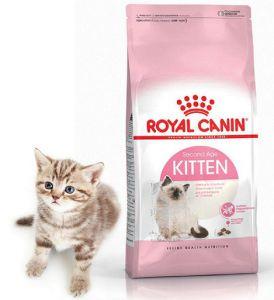 Роял Канин корм Royal Canin купить в интернет-магазине